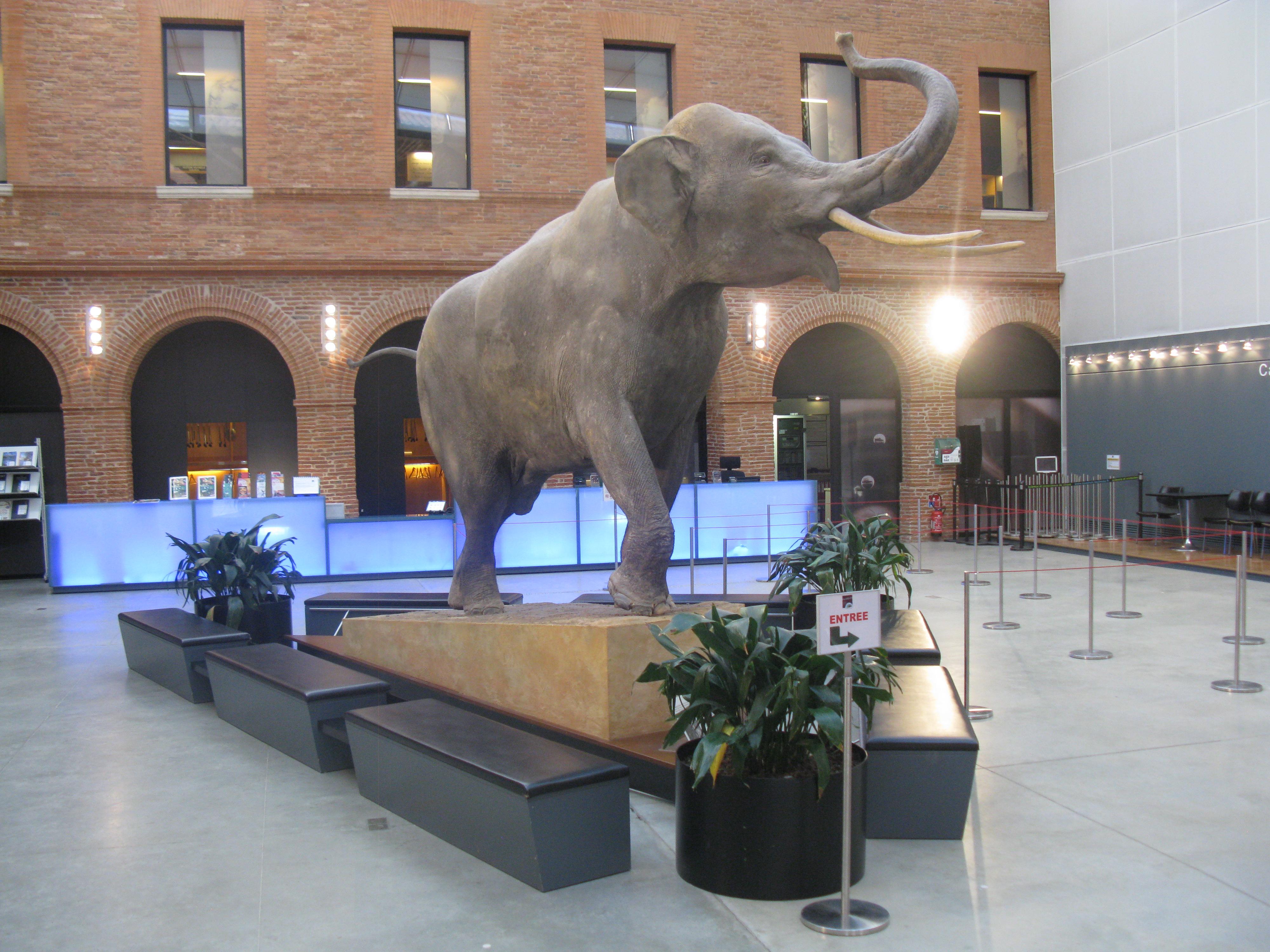 """Résultat de recherche d'images pour """"museum de toulouse elephant"""""""